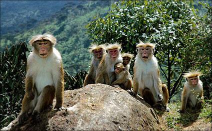family_of_monkeys.jpg